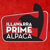 Ilawarra Prime Alpaca